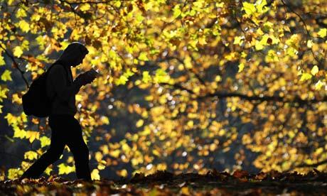 Autumn-leaves-0012